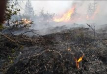 Temperaturas insuales destaron voraces incendios en Siberia